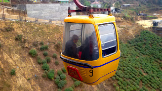 Cable car passing over a tea garden in Darjeeling