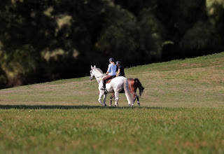 Two riders riding their grey and bay horse's in a big field