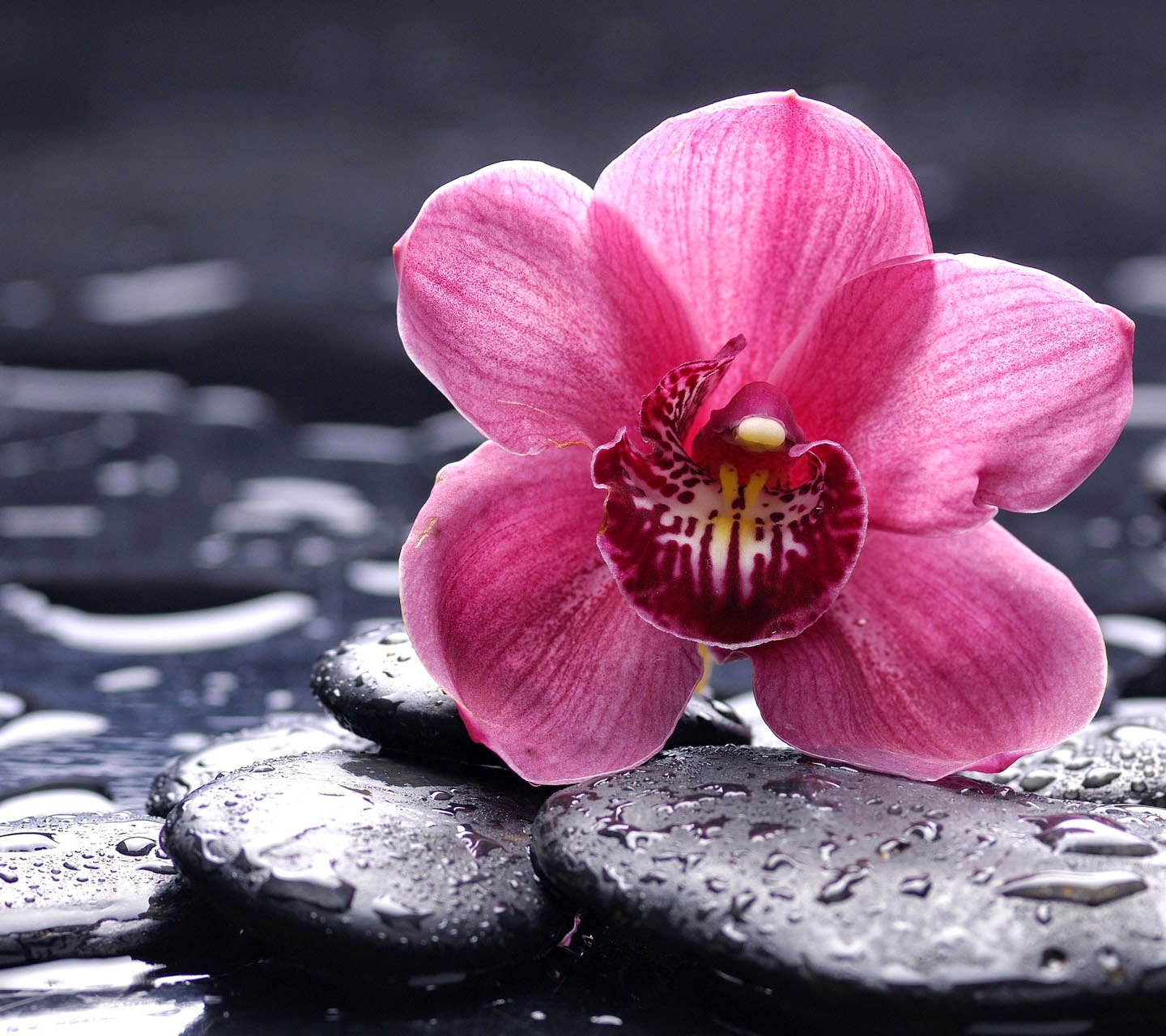 Orchid flower image hd wallpaper stock photos free download izmirmasajfo