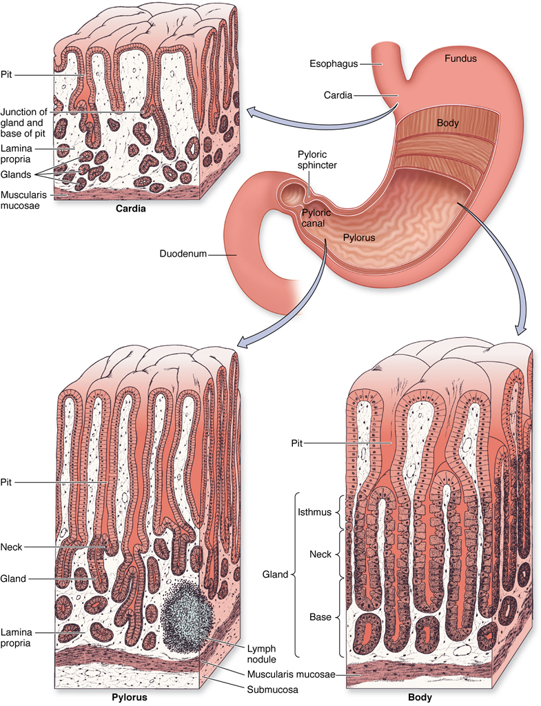 Ser Servidor Digestive Urinary Systems