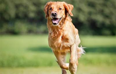 köpek saldırırsa geriye doğru yürüyün