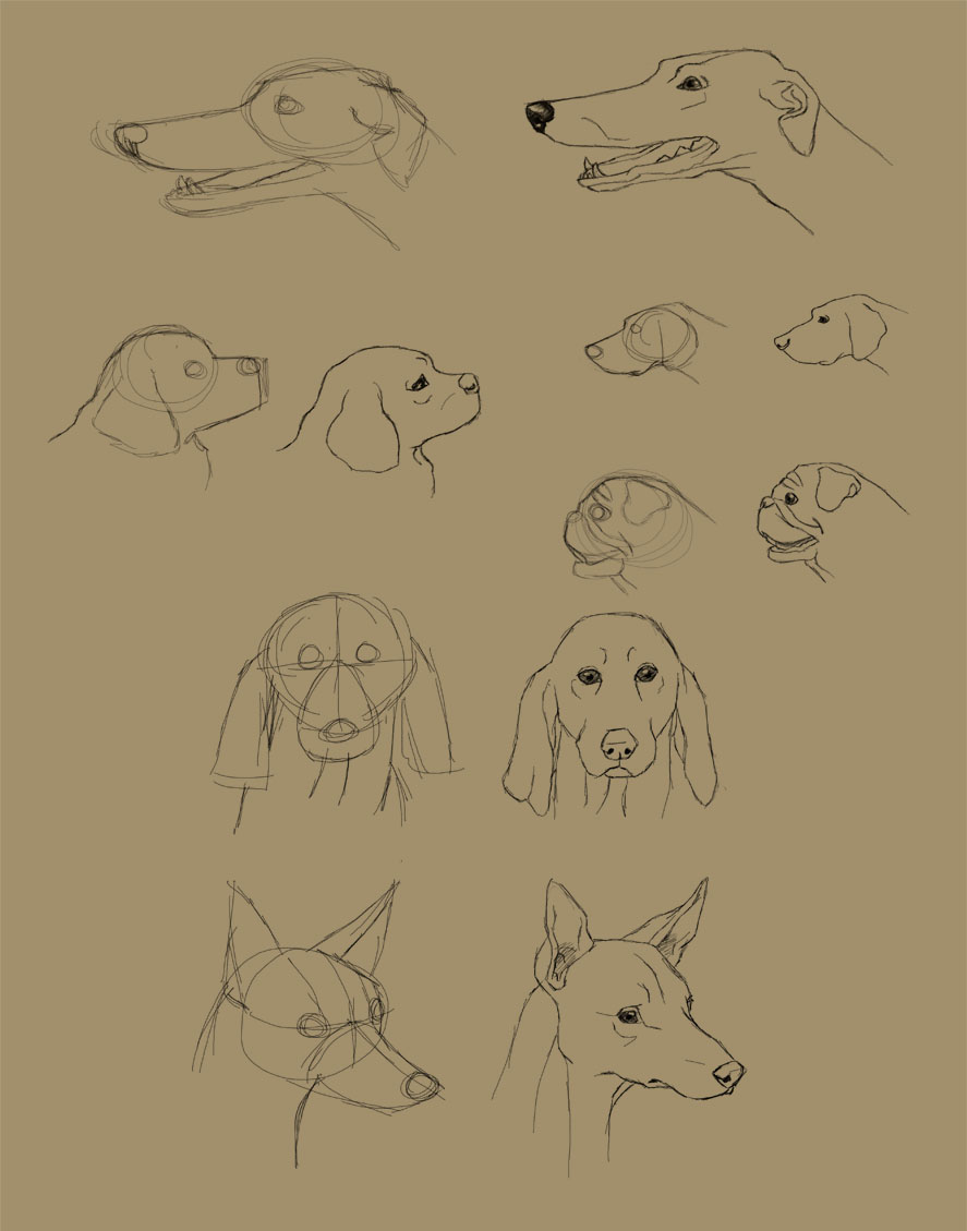 Savanna Williams: How to Draw Dogs: Faces and Bodies
