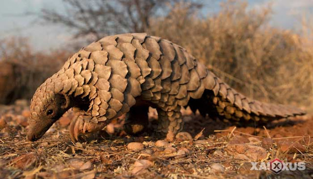 10 Nama Binatang Pemakan Semut Beserta Gambar dan Penjelasannya