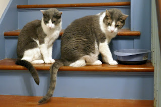 2 cats on stairs: Spackle Puss (L) and Crackle Pop (R)
