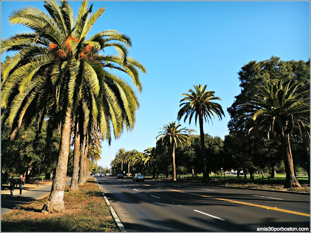 Palm Drive, Universidad de Stanford