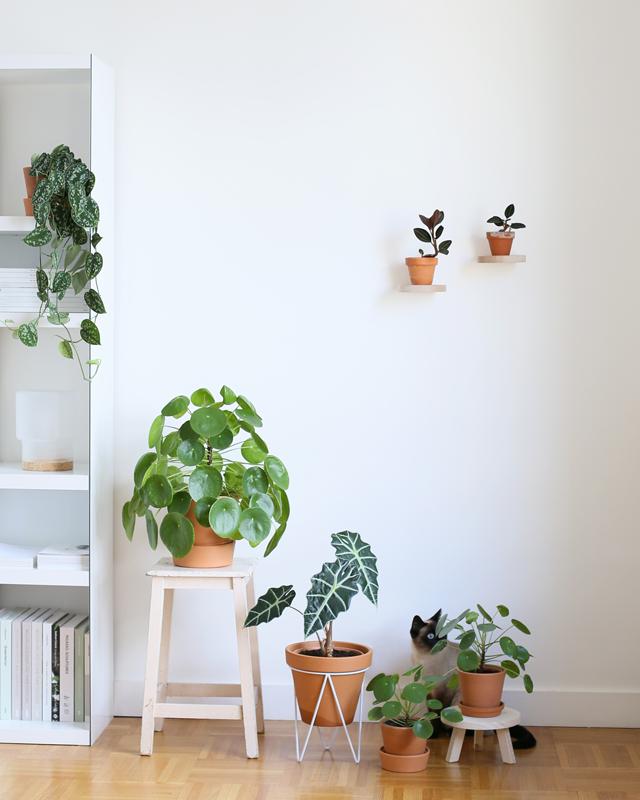 Audrey Jeanne Blog S Lection De Supports Pour Plantes