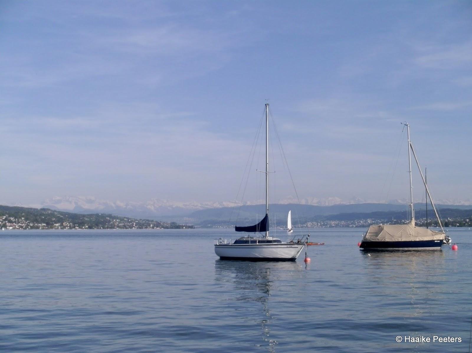 Zürichsee (Le petit requin)