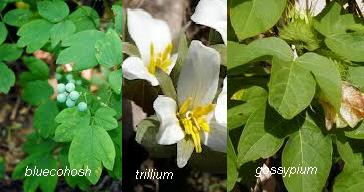 HERBS FOR NATURAL REMEDIES