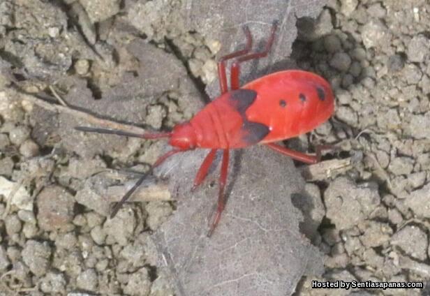 Red Bugs [3].jpg