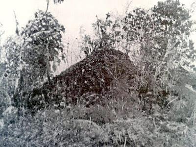 Gambar Aspek Flora Arkeologis Situs Pasir Lulumpang Di Kabupaten Garut