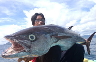 Teknik mancing yellowfin tuna