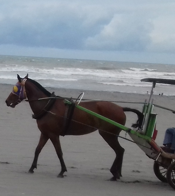 Naik Delman Menyusuri Pantai