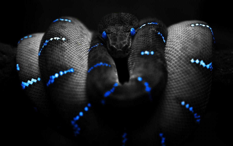 https://3.bp.blogspot.com/-Pswn-OQlSkE/TlZkFVIeEQI/AAAAAAAAC5c/LpH9yhV9Z7g/s1600/Black_Snake_.jpg
