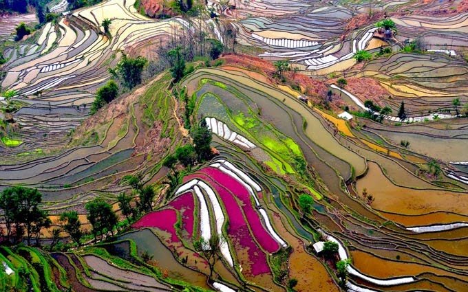 Rice Field Terraces in Yunnan, China