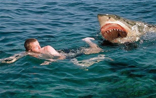 Beautiful And Dangerous Animalsbirds Hd Wallpapers Shark