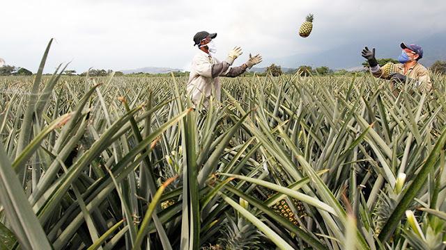 Informe: El 80 % de las tierras de Colobmia están en manos del 1 % de los propietarios