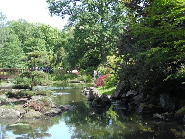 niwaki na wyspie w ogrodzie japońskim