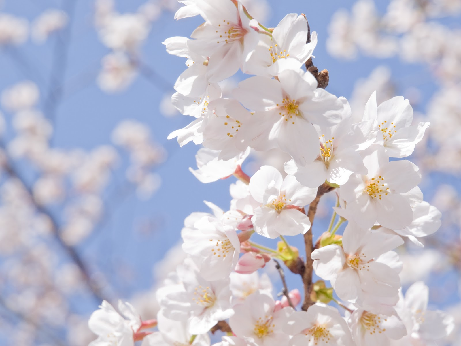 Jasne myślenie na wiosnę