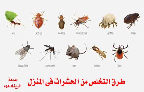 طرق التخلص من الحشرات فى المنزل