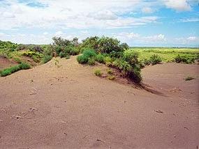Jenis-Jenis Sand Dunes (Gumuk Pasir)
