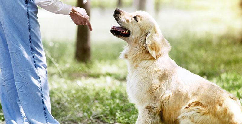 Comment dresser son chien soi-même
