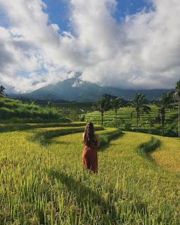 Jatiluwih Rice Terrace Bali