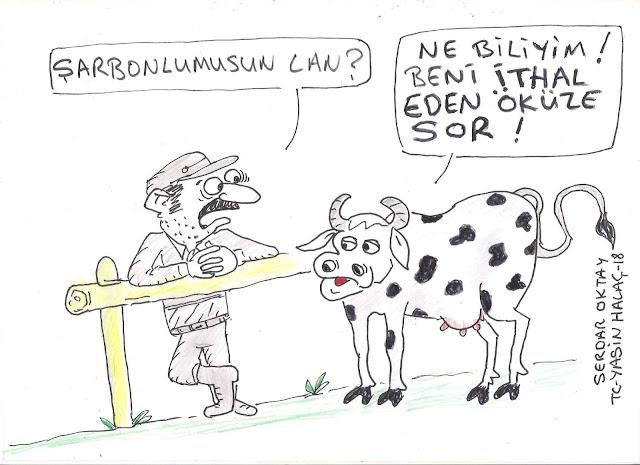 şarbonlu inek karikatür