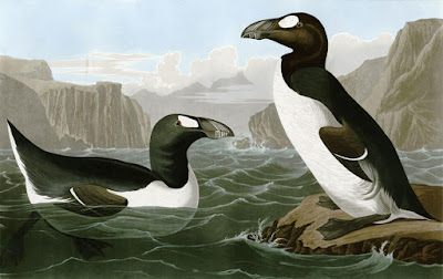 Great Auk John James Audubon