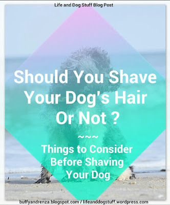 Should You Shave Your Dog's Hair Or Not