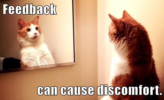Cat stares into mirror and backs off in surprise
