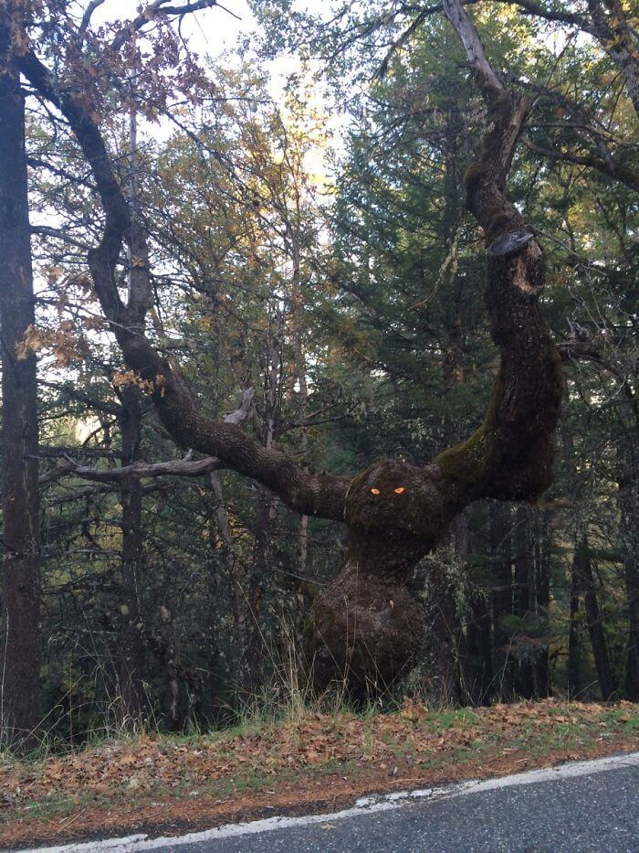 34 Confusing Trees That Messed With Our Perception