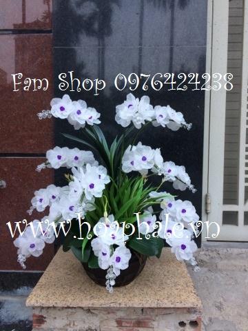 Hoa da pha le tai Tay Mo