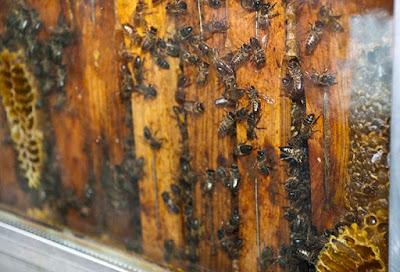 repor abejas01 - Las abejas, un eslabón fundamental para el medio ambiente - El Apicultor Español: Actitud y Aptitud Apícola