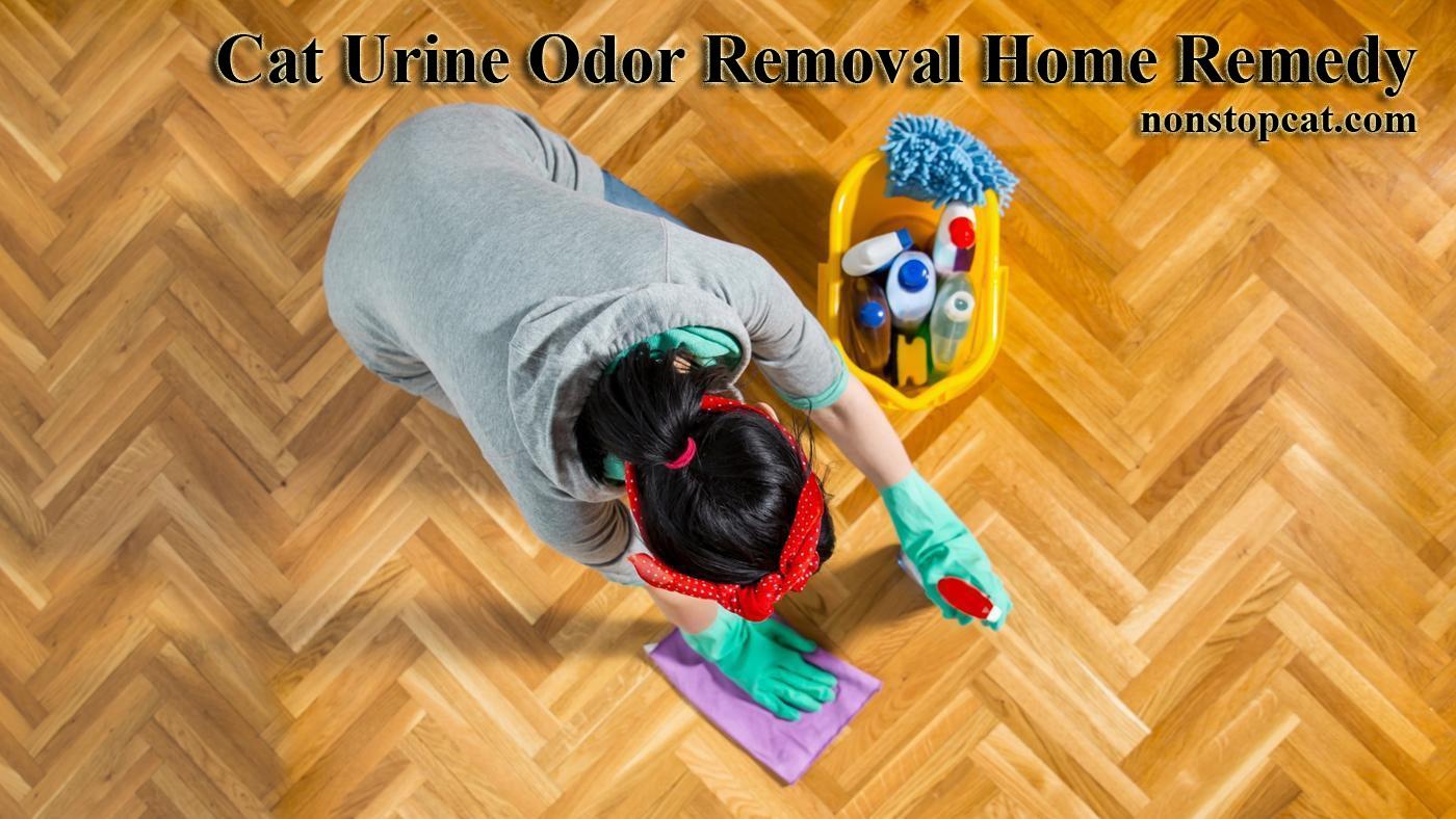 Cat Urine Odor Removal Home Remedy