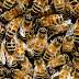 Senhor do Bonfim: Criança de 3 anos morreu após picada de abelha