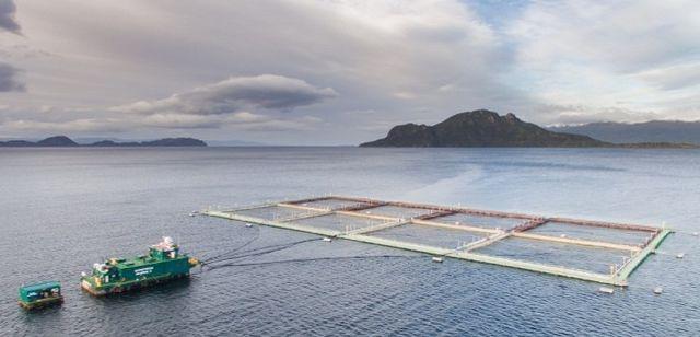 Magallanes: Empresas salmoneras proyectan crear más de 1.000 puestos de trabajo