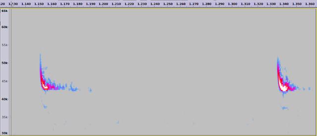 Audacity bat call analysis spectrogram