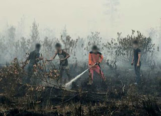 palm oil forest fires