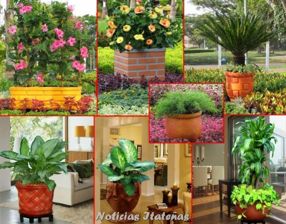 Noticias itate as el lunes 15 habr una capacitaci n en for Concepto de plantas ornamentales