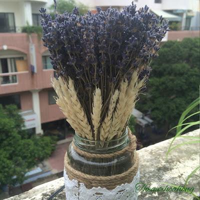 Hoa lavender - món quà thú vị