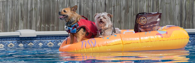 Jada and Bailey sailing in their boat with wellness dog food