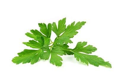 daun peterseli,manfaat daun peterseli,herbs