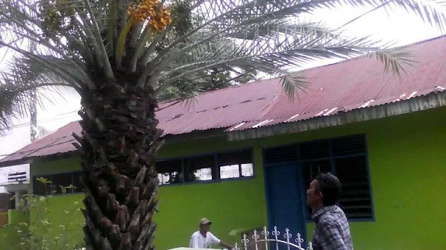 Di Padang, Pohon Kurma Ini Bisa Tumbuh dan Berbuah! Letaknya di Samping Masjid
