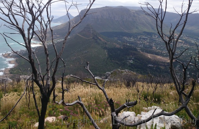 Hout Bay to Lion's Head from Suther Peak