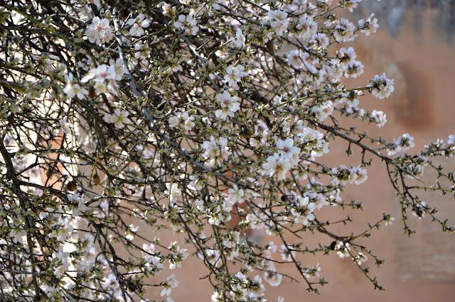 Alhambra kwiaty