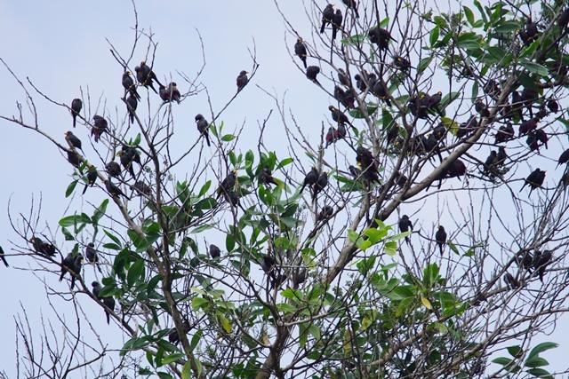 Memotret burung dengan kamera Sony A6000