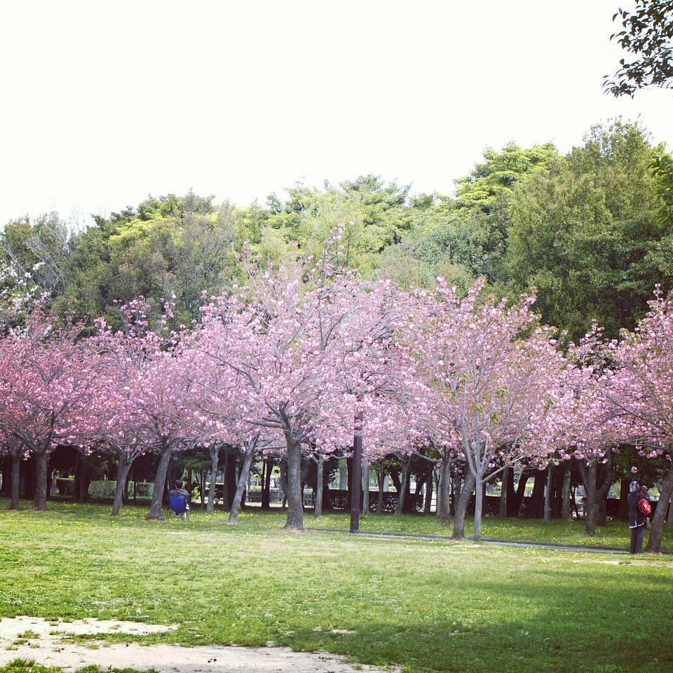 Taman Sakura Cibodas by c.i.s.k.4