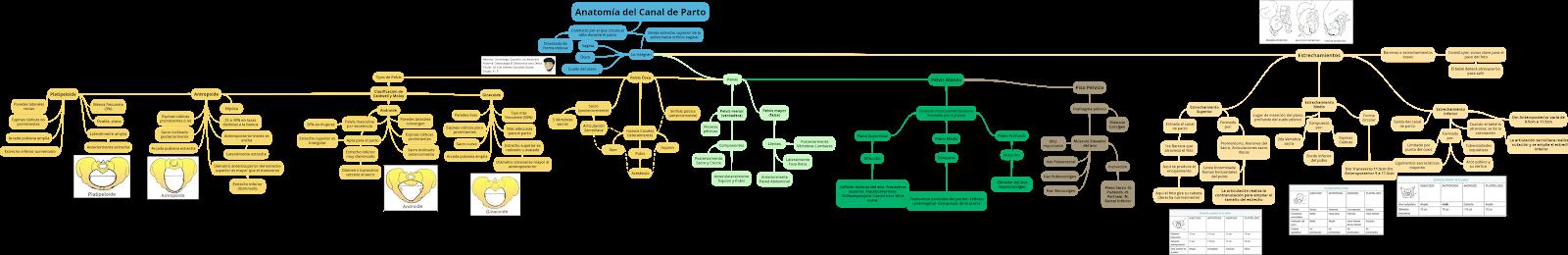 Ginecología y Obstetricia: Anatomía del Canal de Parto