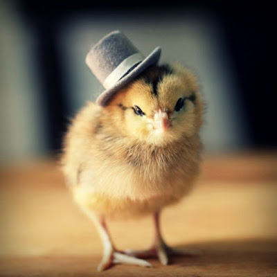 Cerita Tamsil Islami - Ayam Jinak dan Ayam Liar