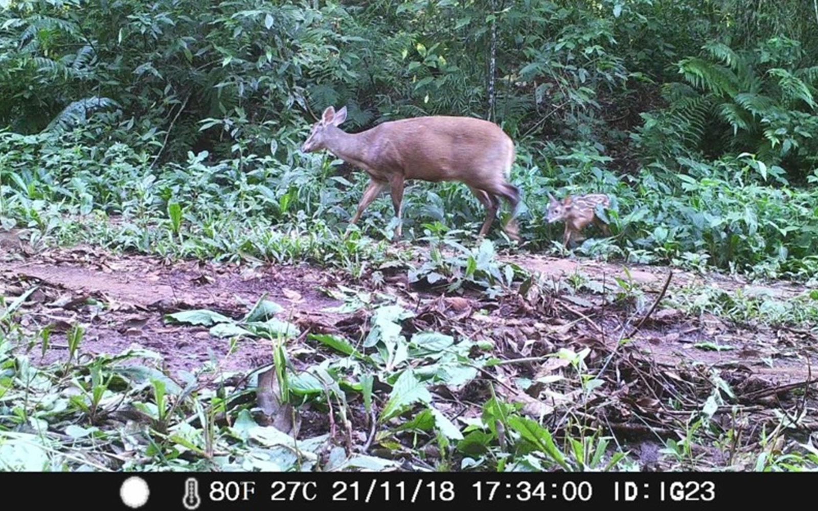 Registran más de 430 imágenes de fauna en el Parque Nacional Iguazú